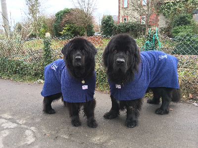 Tsuki and Atrayu modelling dog robes